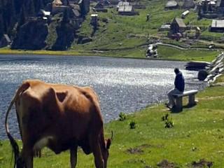 عقارات للبيع في البوسنة والهرسك / اراضي وبيوت للبيع باسعار مناسبة